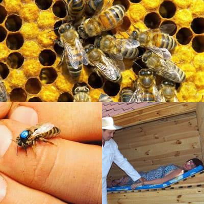 Апитерапия или пчелотерапия: что это и для чего применяется?